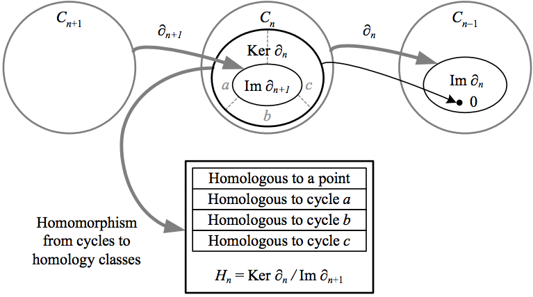 27.homology-v2